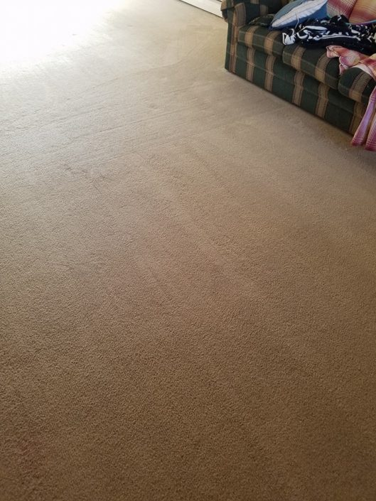 Pet Odor & Stain Removal Vincent